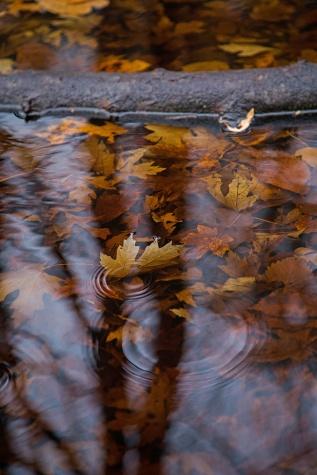 autumn mere-8 small