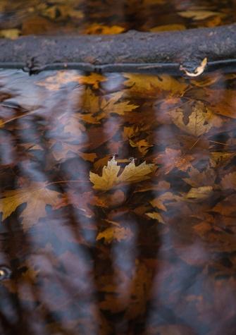 autumn mere-9 small