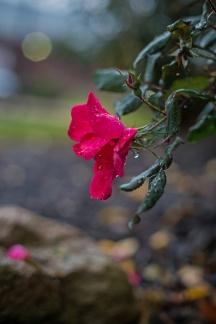 rainy day walk-14 small