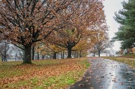 rainy day walk-4 small