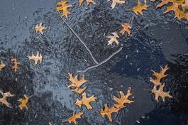 rainy day walk-6 small