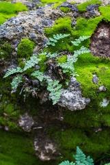 friedrich wilderness park san antonio-17 small