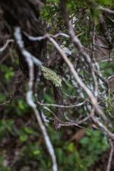 friedrich wilderness park san antonio-18 small