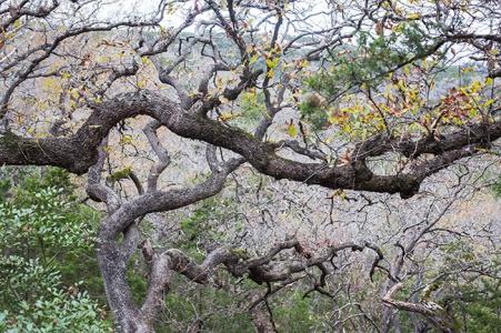 friedrich wilderness park san antonio-3 small