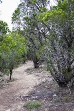 friedrich wilderness park san antonio-7 small