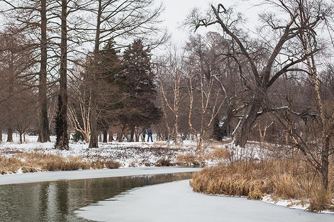 winter walk-6 small