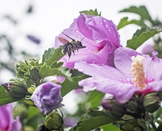 bumblebees-3 small