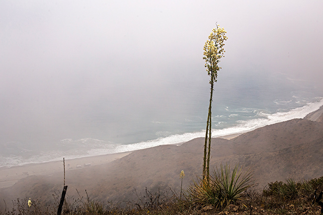 chaparral yucca marine layer point mugu state park-3 small