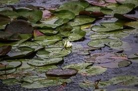forest park wetlands flora-1 small