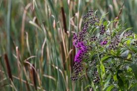 forest park wetlands flora-31 small