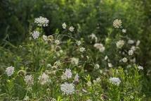 forest park wetlands flora-37 small