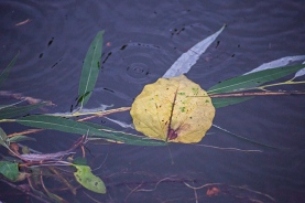 forest park wetlands flora-8 small