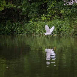 wetland animals-9 small