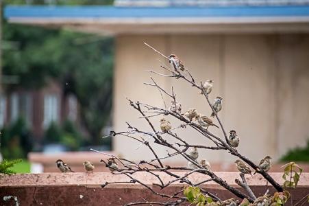 sparrows in the rain-1 small
