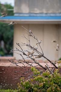 sparrows in the rain-2 small