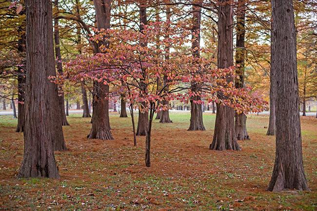 autumn-magic-tower-grove-park-2-small