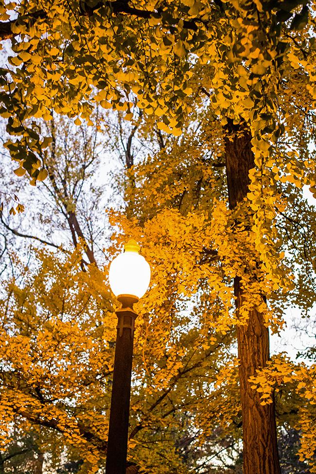 autumn-magic-tower-grove-park-4-small