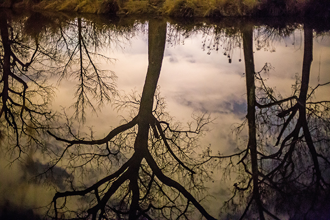 reflected-trees-1-small
