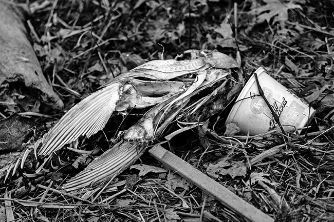 down-by-the-riverside-bw-9-small