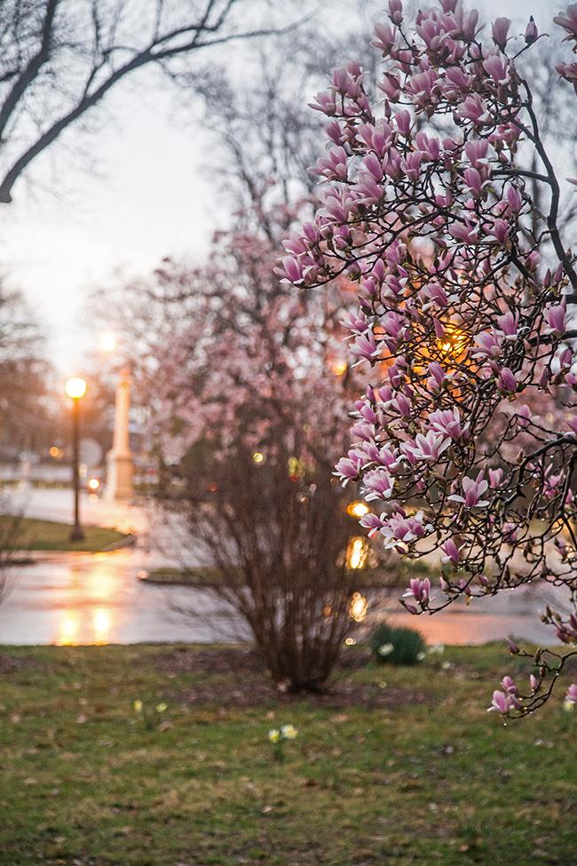 rainy day magnolias-10 small