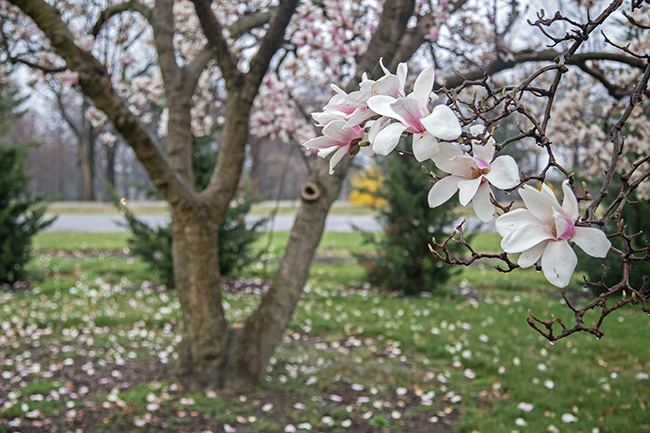 rainy day magnolias-3 small