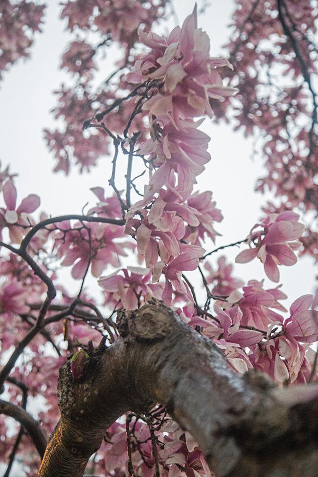 rainy day magnolias-4 small