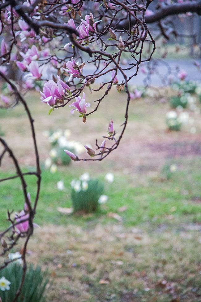 rainy day magnolias-6 small