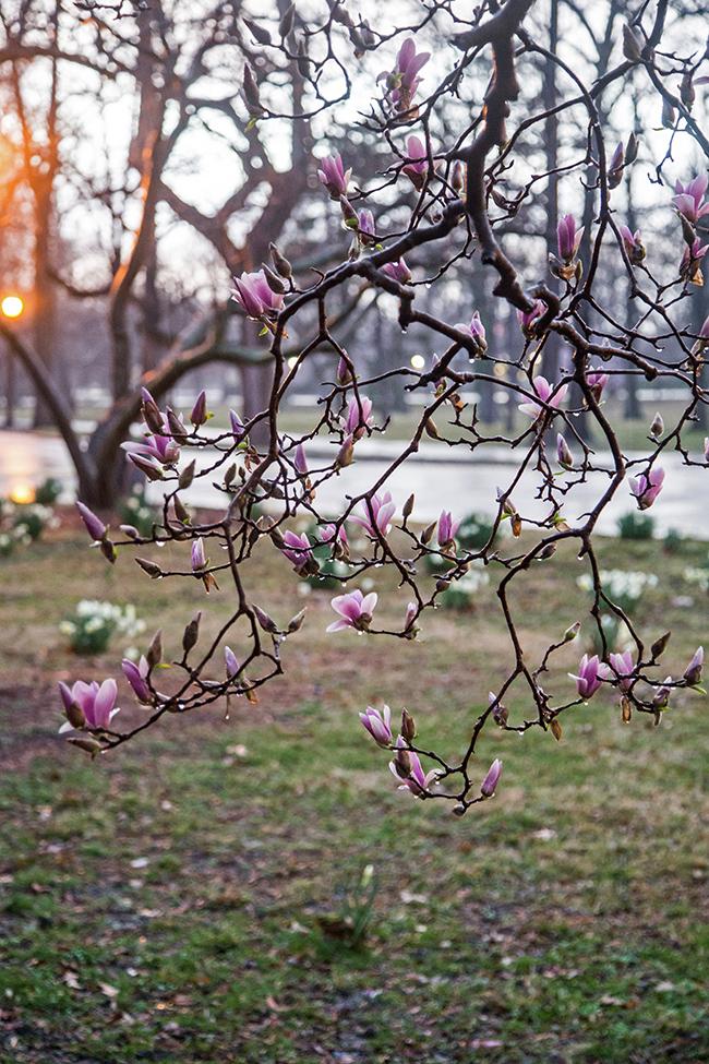 rainy day magnolias-7 small