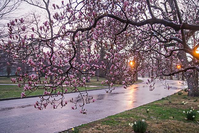 rainy day magnolias-8 small
