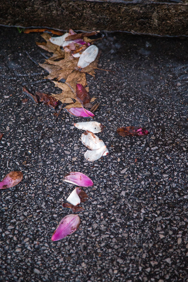 rainy day magnolias-9 small