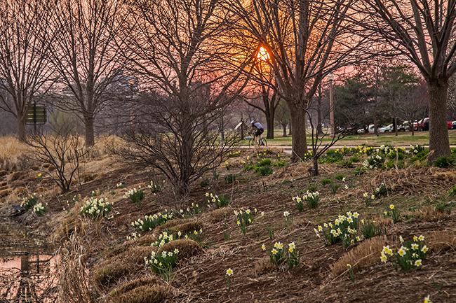 sunset at pagoda circle with daffodils-4 small