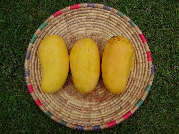 Of Mountains and Mangoes and a Great Lady – VedaSamuel